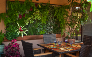 Dining living wall